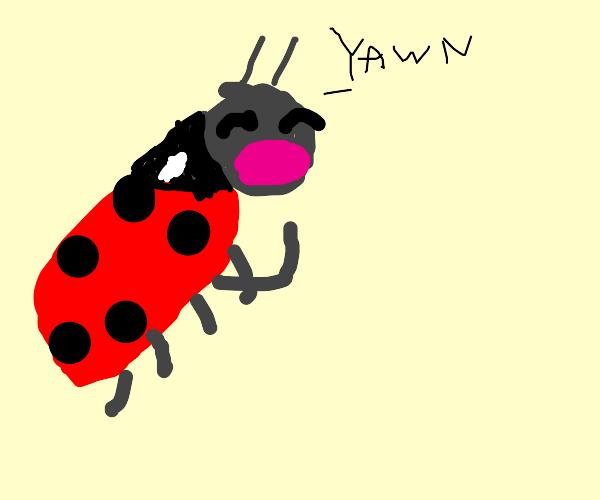 Tired ladybug
