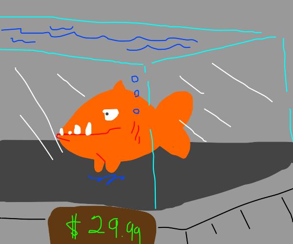 Piranha in a Store