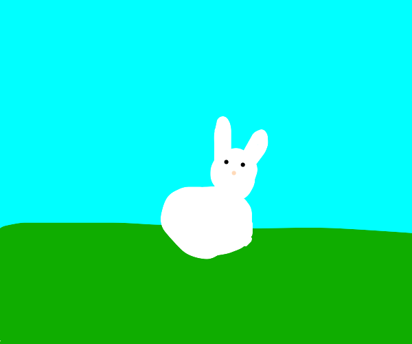 Bunny on grass squeak