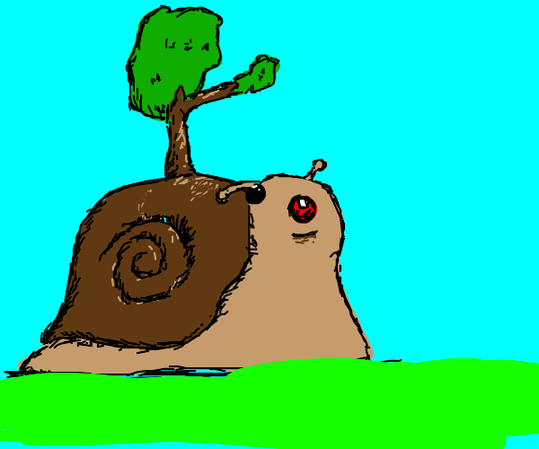 The elusive Wooden-Shell Snail