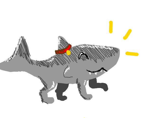 sharkdog pet!