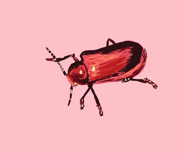 Poisonous beetles