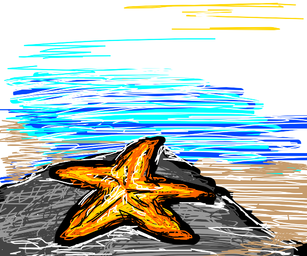 Starfish chilling on a rock