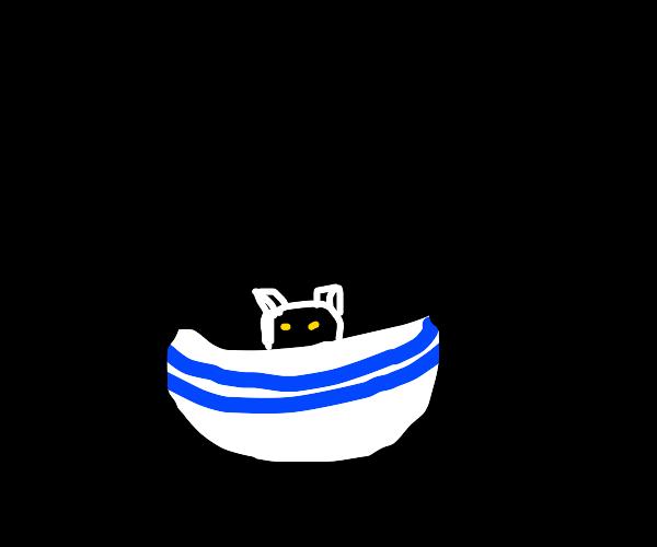 Black cat in a bowl