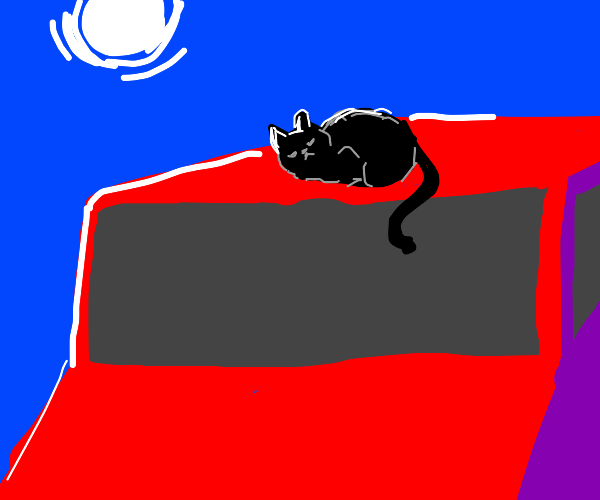 black cat on top of red car