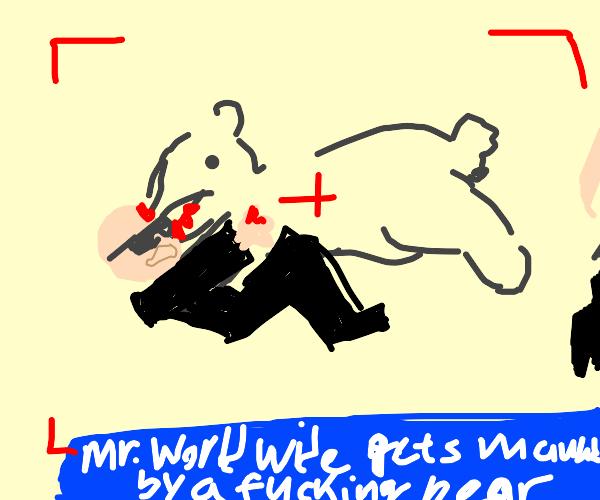 Pitbull is mauled by a polar bear on live tv