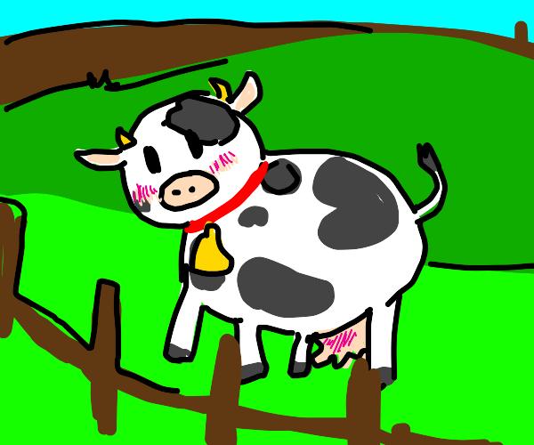 blushing cow with.. blushing udder.