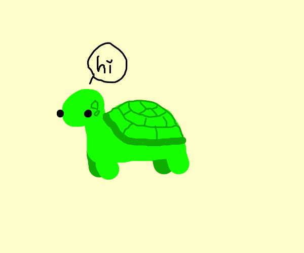 hello i'm a turtle