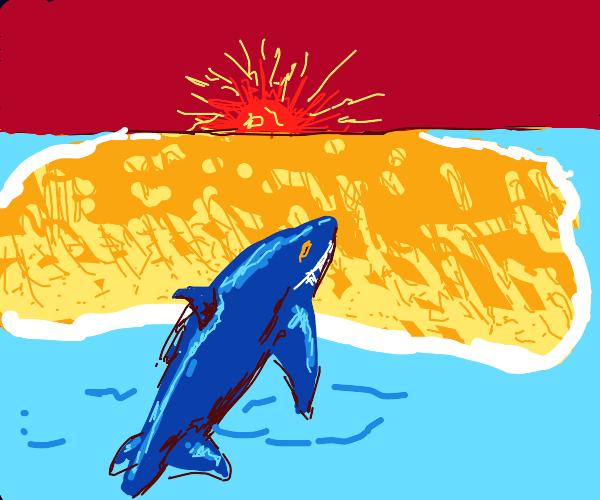Shark gets on an island