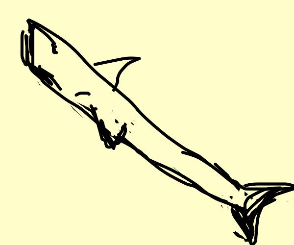 Shark but with shaaa