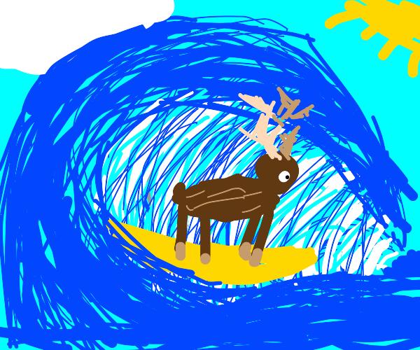Reindeer Surfing