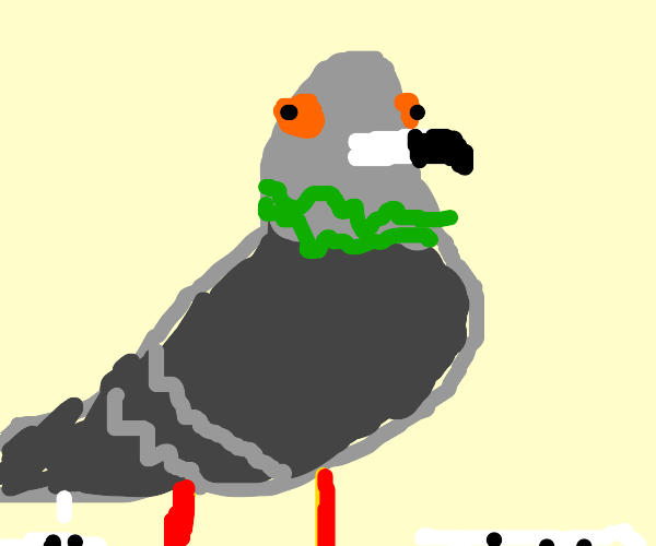 Derp Pidgeon