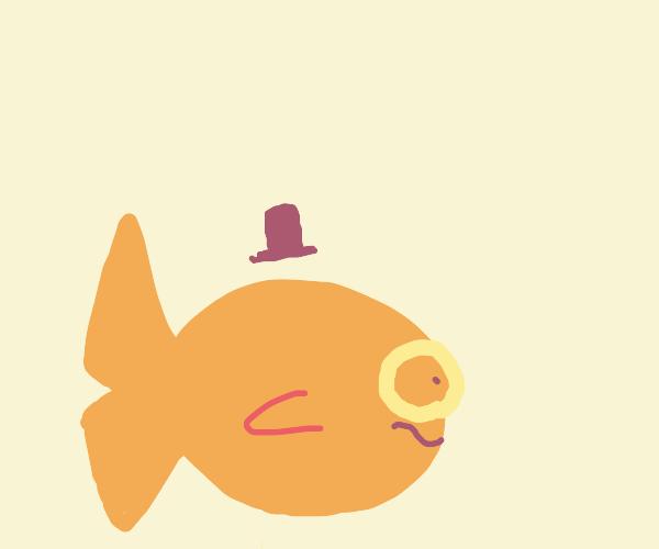 Gentlemen Goldfish