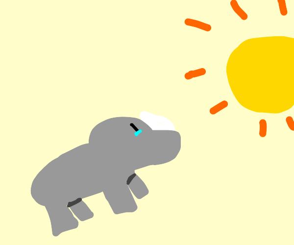 Rhino watching the sunset