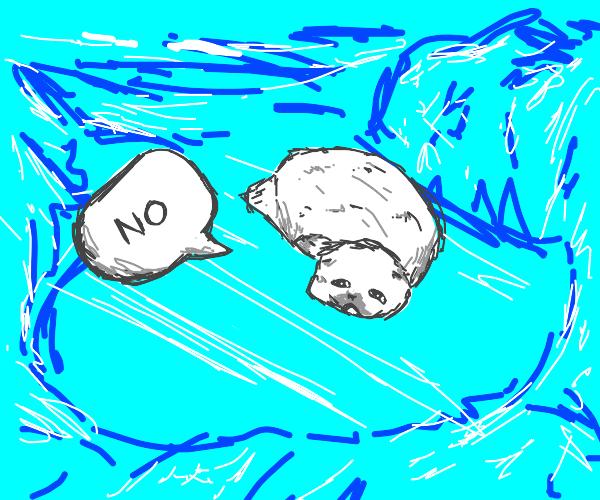 Cute seal says no