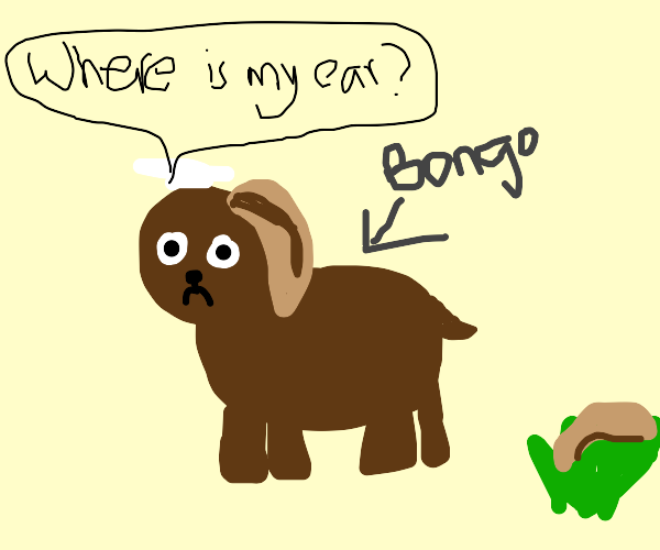 Dog named Bongo is told to find his ears