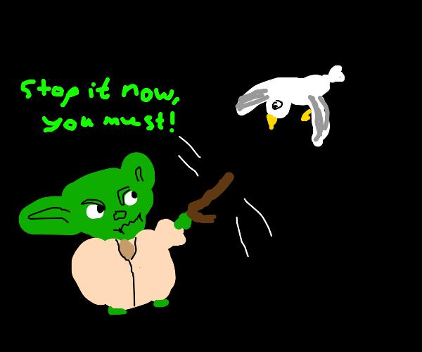 Yoda attacks a seagull