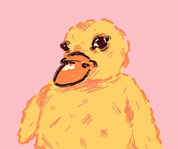 Green bird with a duck beak stares intensely