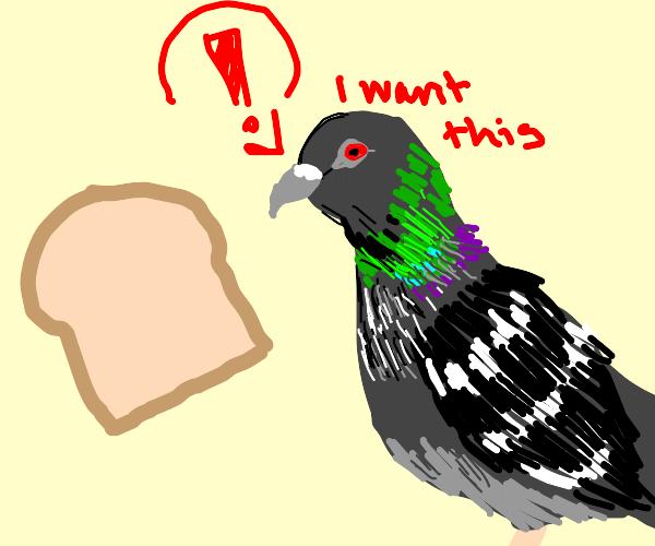 pigeon wants bread