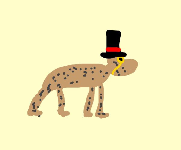 Dapper cheetah