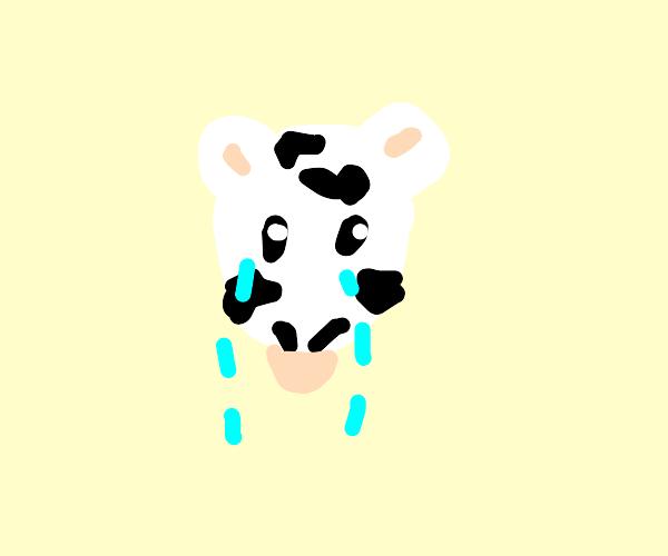 cow sad