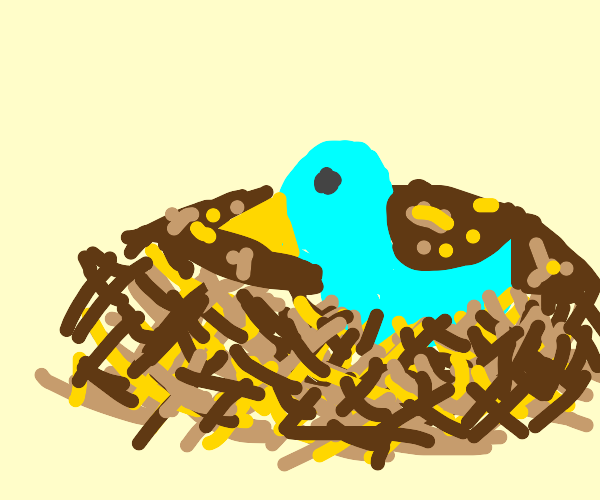 Blue bird is being consumed by a bird nest