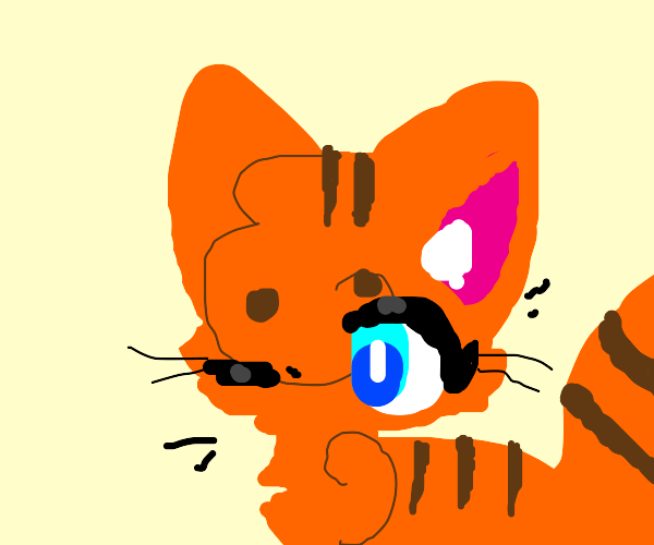 Brown and Orange Tabby cat