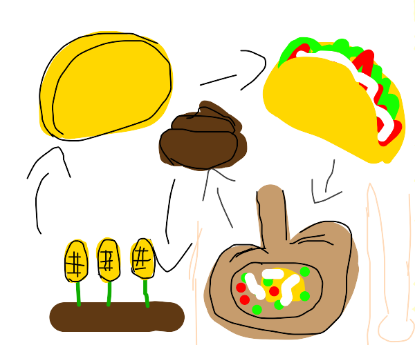 Life cycle of a taco