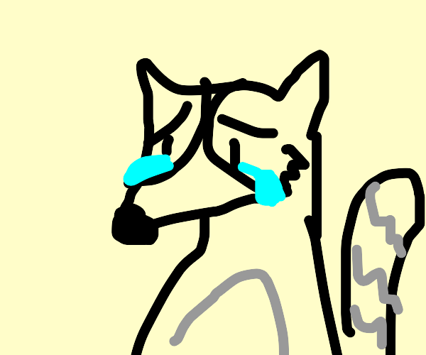 Loser racoon