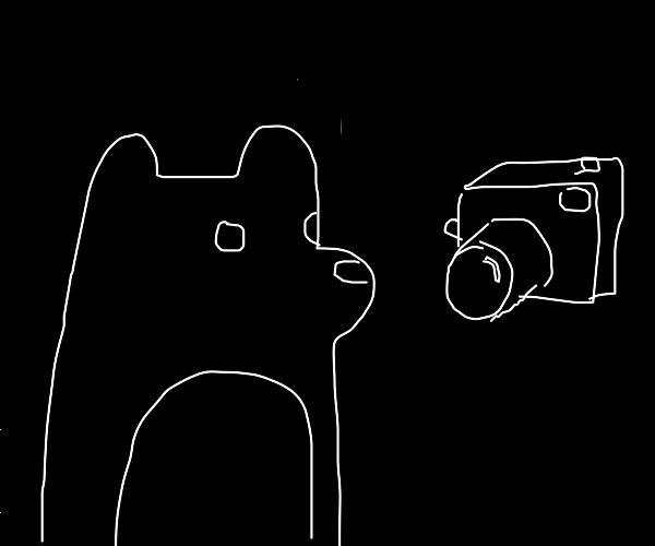 black bear looking at camera