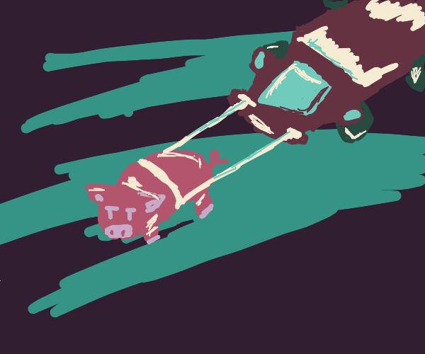 pig pulling a car