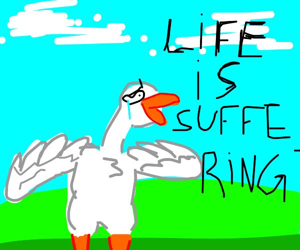 Duck is S U F F E R I N G