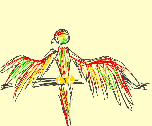 Parrot with tennis ball feet