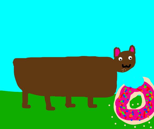 bear eats a giant donut