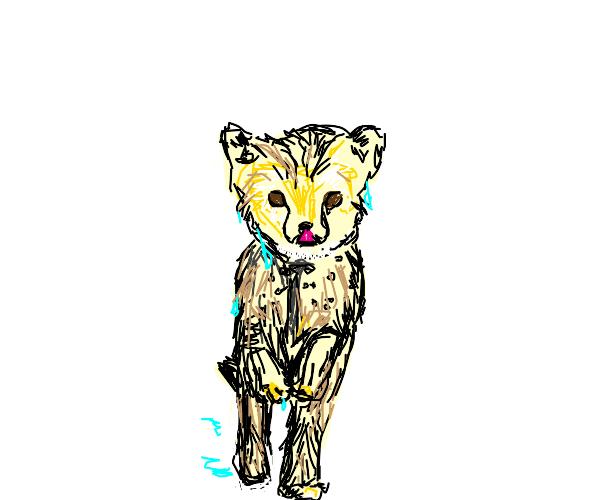 Wet Cheetah