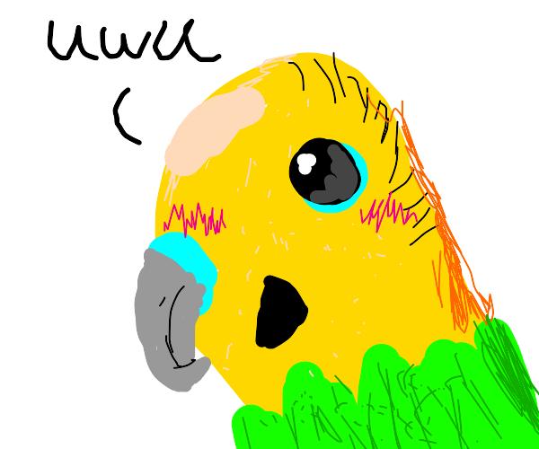 """Parakeet saying """"uwu"""""""