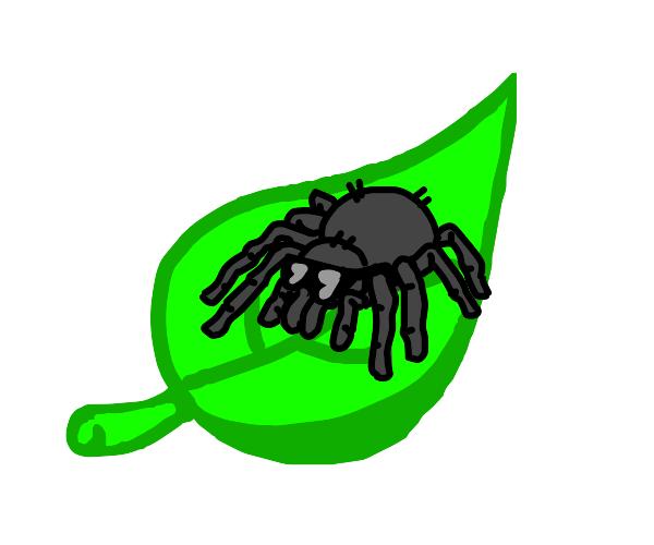 Cool spider on a leaf