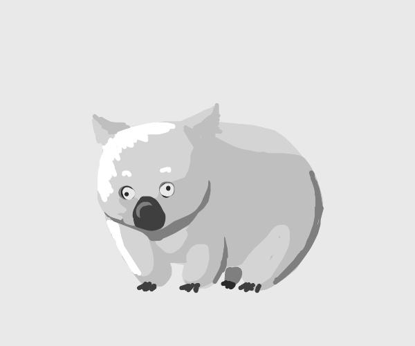 Demented wombat