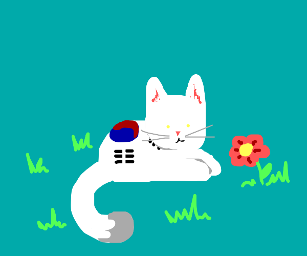 Chill korea flag cat looking at flower
