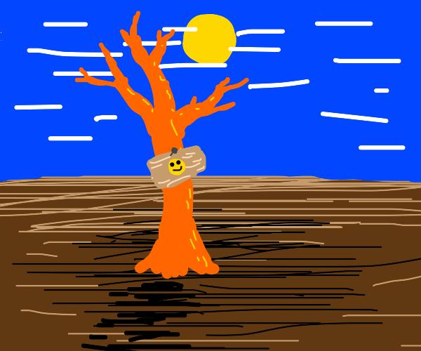 Happy orange tree under sun