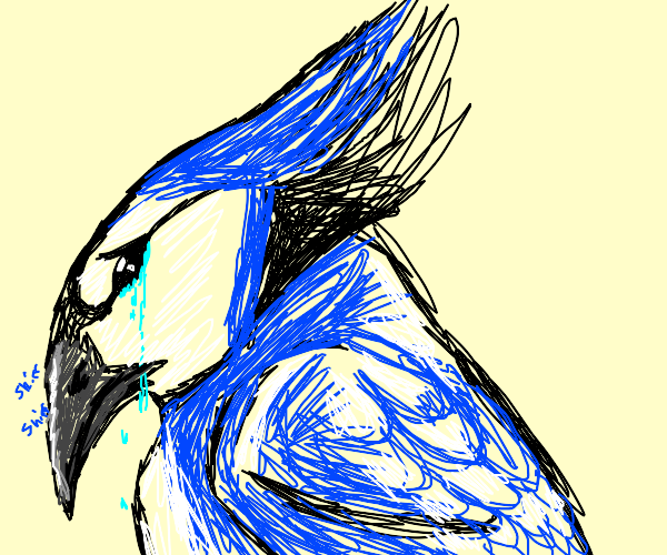 Crying bluejay