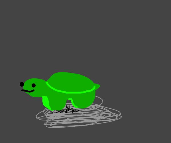 Turtles or something turtlish