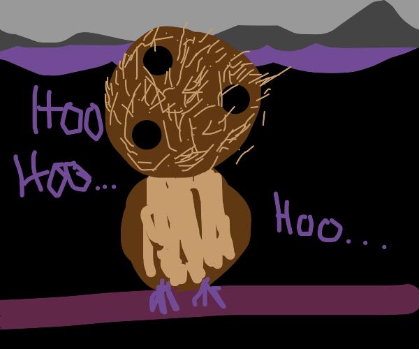 owl with a coconut head saying hoo hoo hoo