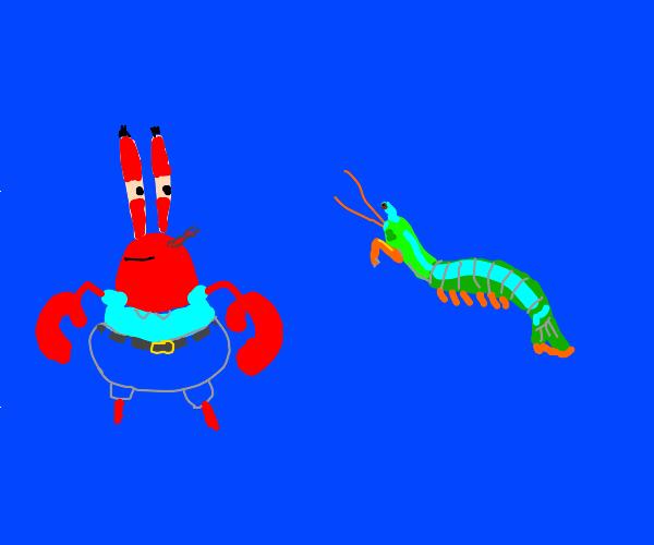 Mr. Krabs Stares at Blue Mantis Shrimp