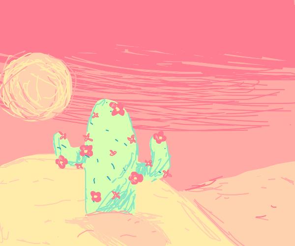 lone cactus in the desert