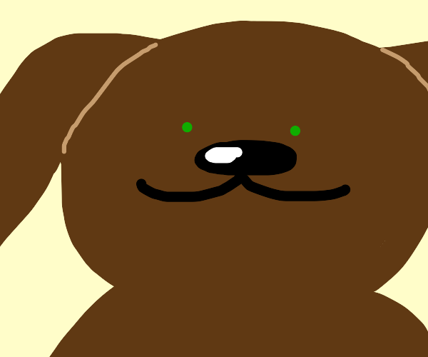 Cute dog with green eyes looks at you