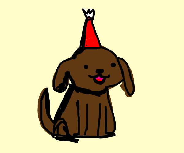 Happy birthday to dog!