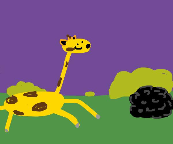 Giraffe after the afro, he wants a Giraffro