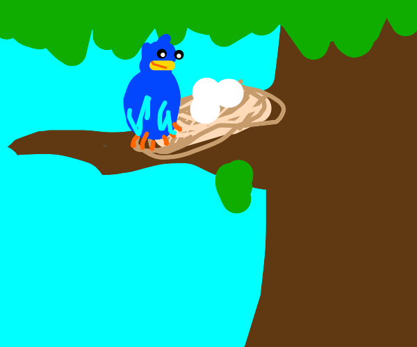 A bird sits in a tree with her eggs