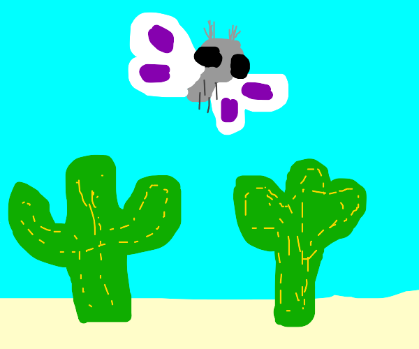 Moth in the Desert